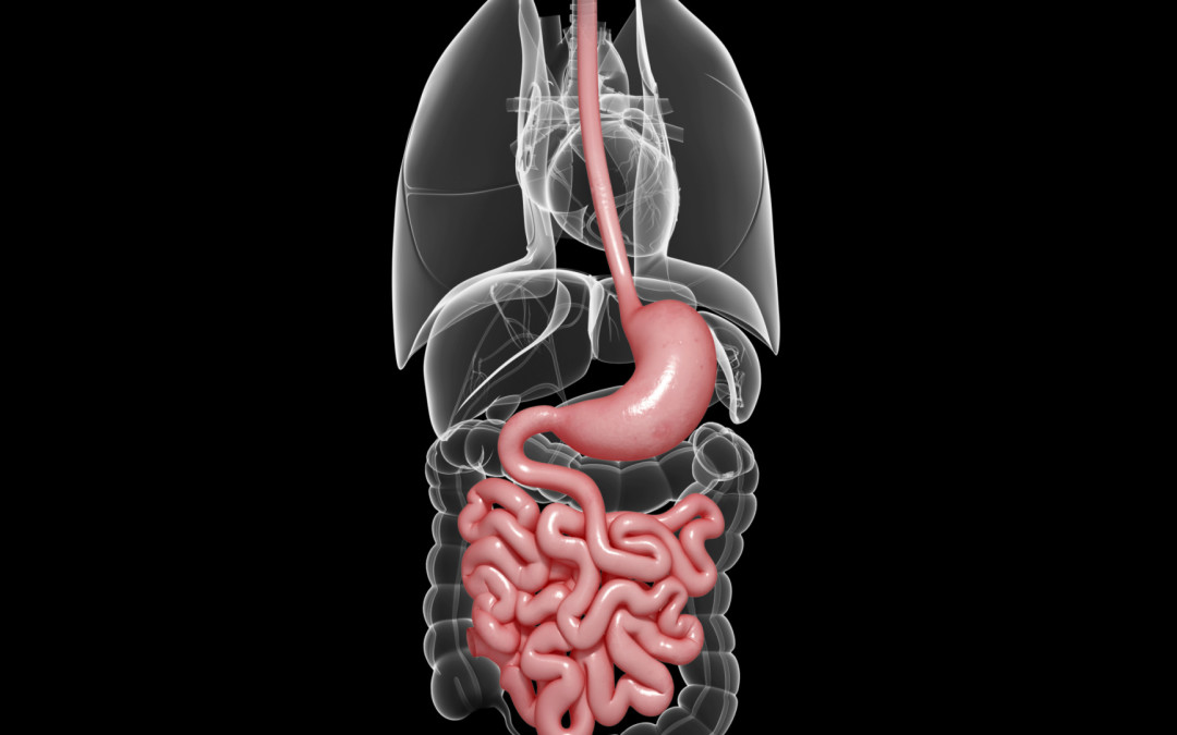 Bowen Therapy for Digestion and Organ Function