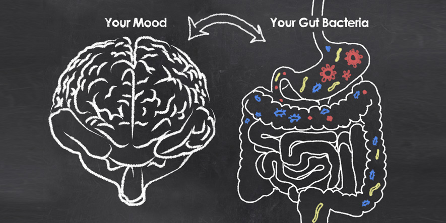 Psicobióticos: qué son y cómo equilibran tus emociones