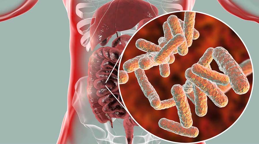 Modelo matemático puede predecir éxito de tratamientos que manipulan el microbioma intestinal