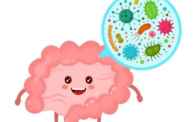 Microbiota: funciones